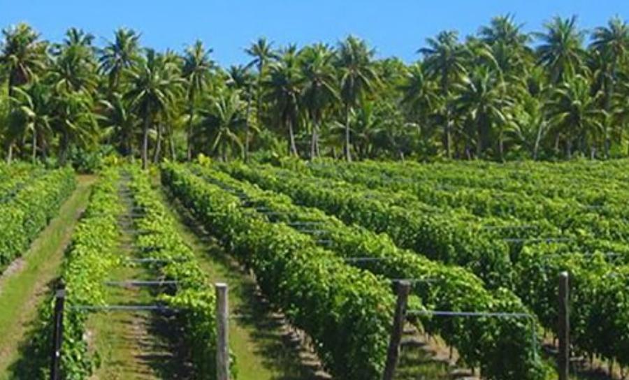 Rangiroa French Polynesia