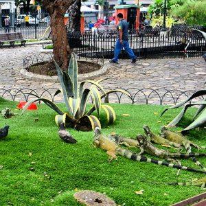 Seminario Park, also known as Parque de las Iguanas (Iguana Park) for the large population of iguanas it houses.